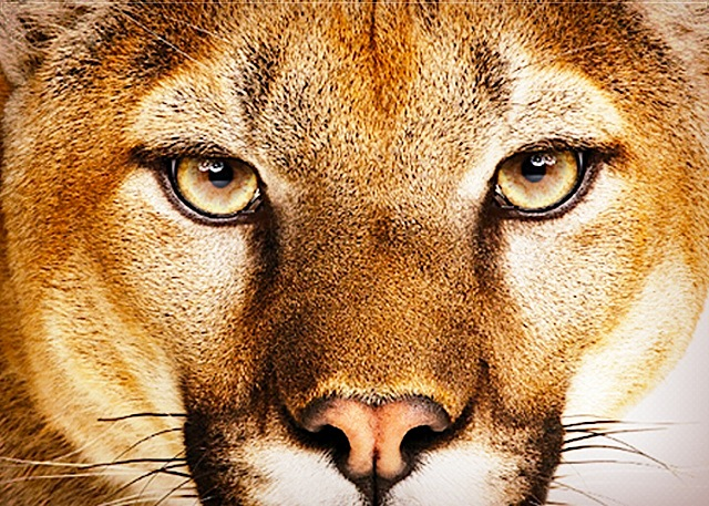 Rumor: Looks Like Mountain Lion Could Be Released In June